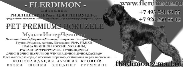 цвергшнауцер  Pet Premiums Boruzele